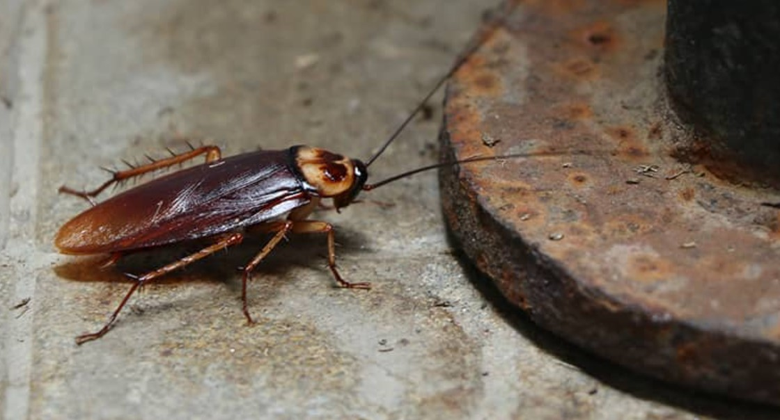 What Attracts Cockroaches to Your Home?